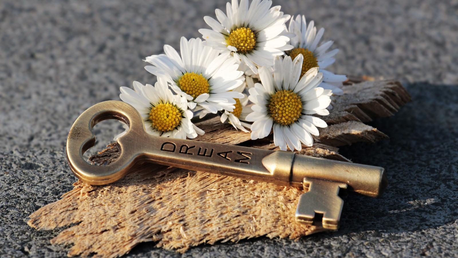 The dreams key and daisy flowers wallpaper 1600x900