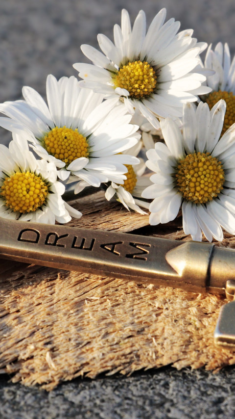 The dreams key and daisy flowers wallpaper 480x854