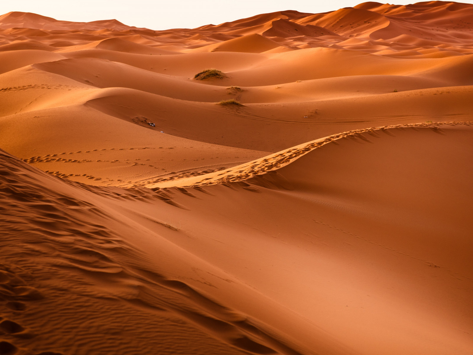 Sahara Desert wallpaper 1600x1200