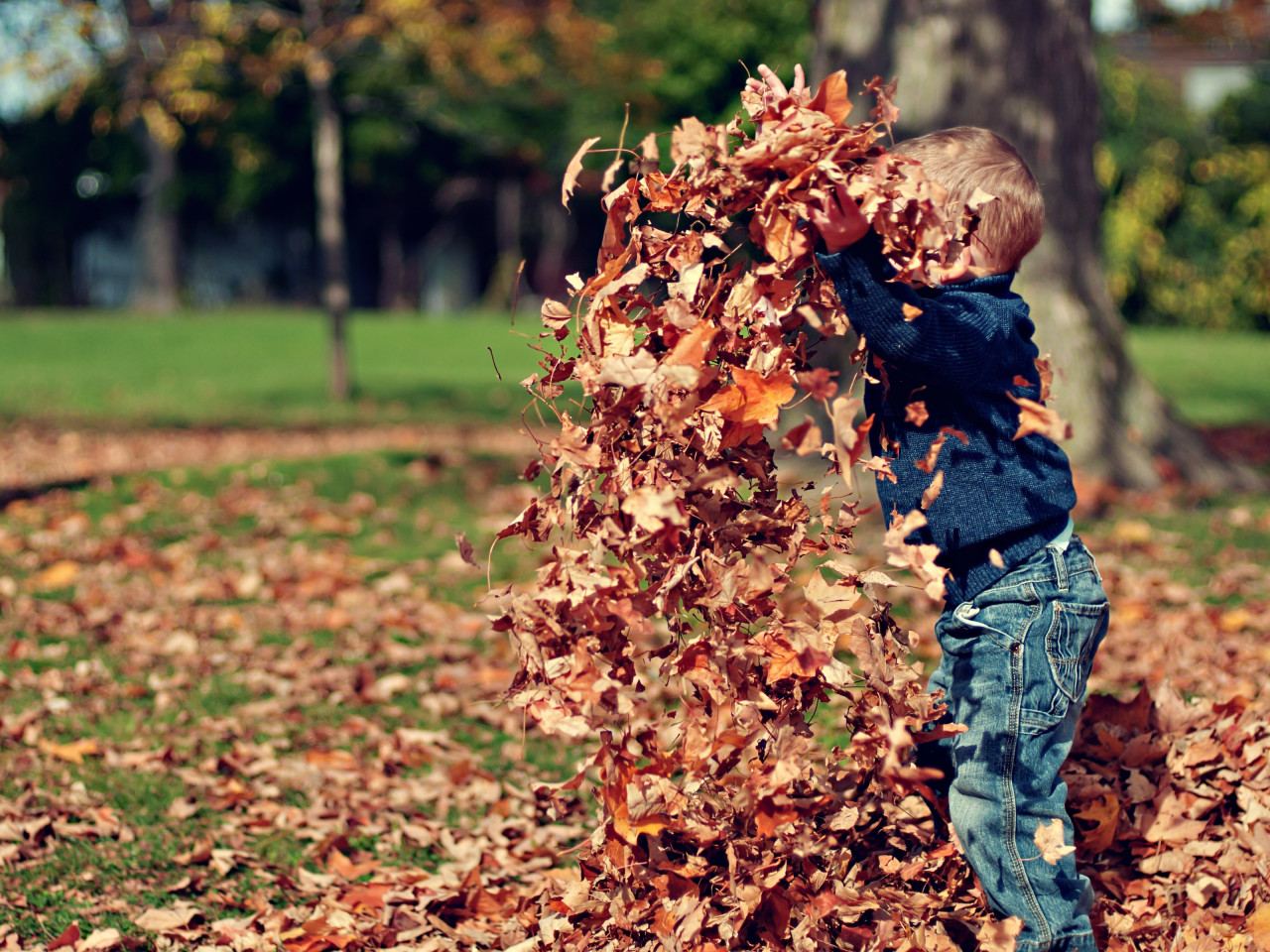 The child is playing with leaves wallpaper 1280x960
