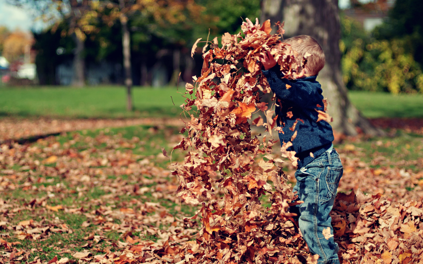 The child is playing with leaves wallpaper 1440x900