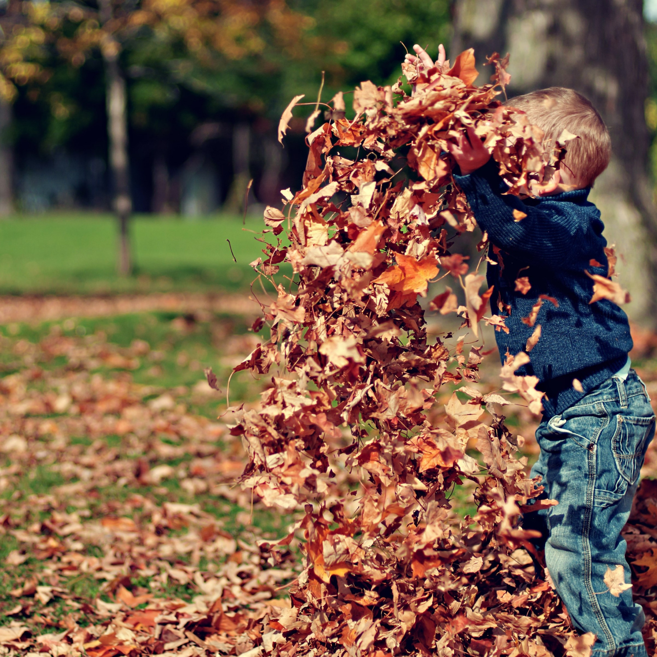 The child is playing with leaves wallpaper 2224x2224