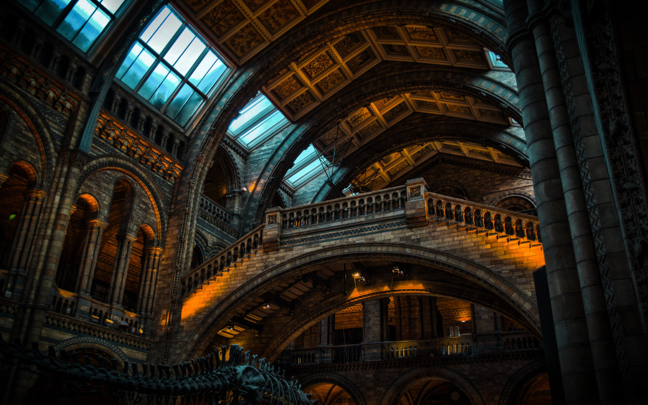 Inside of Natural History Museum from London | 1280x800 wallpaper