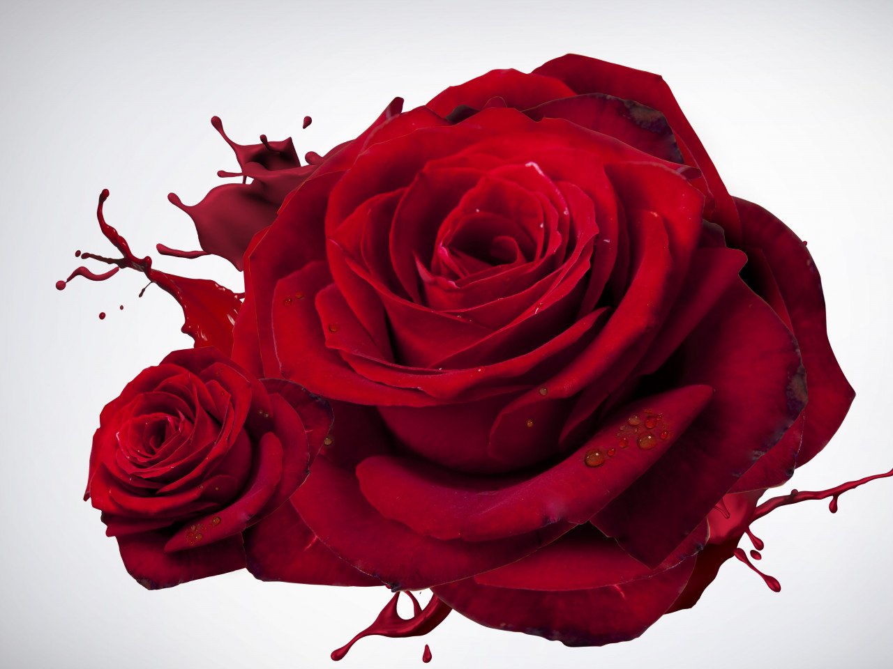 The most beautiful red roses wallpaper 1280x960