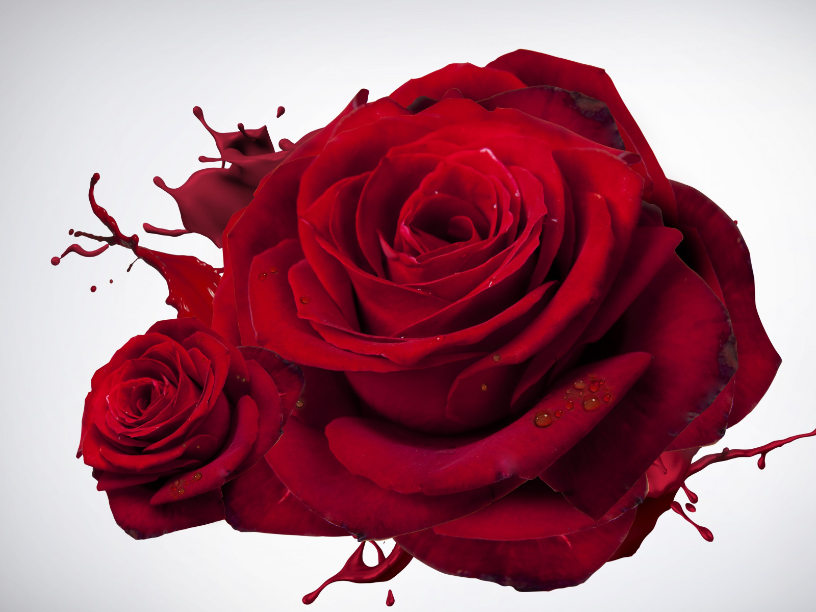 The most beautiful red roses | 1600x1200 wallpaper