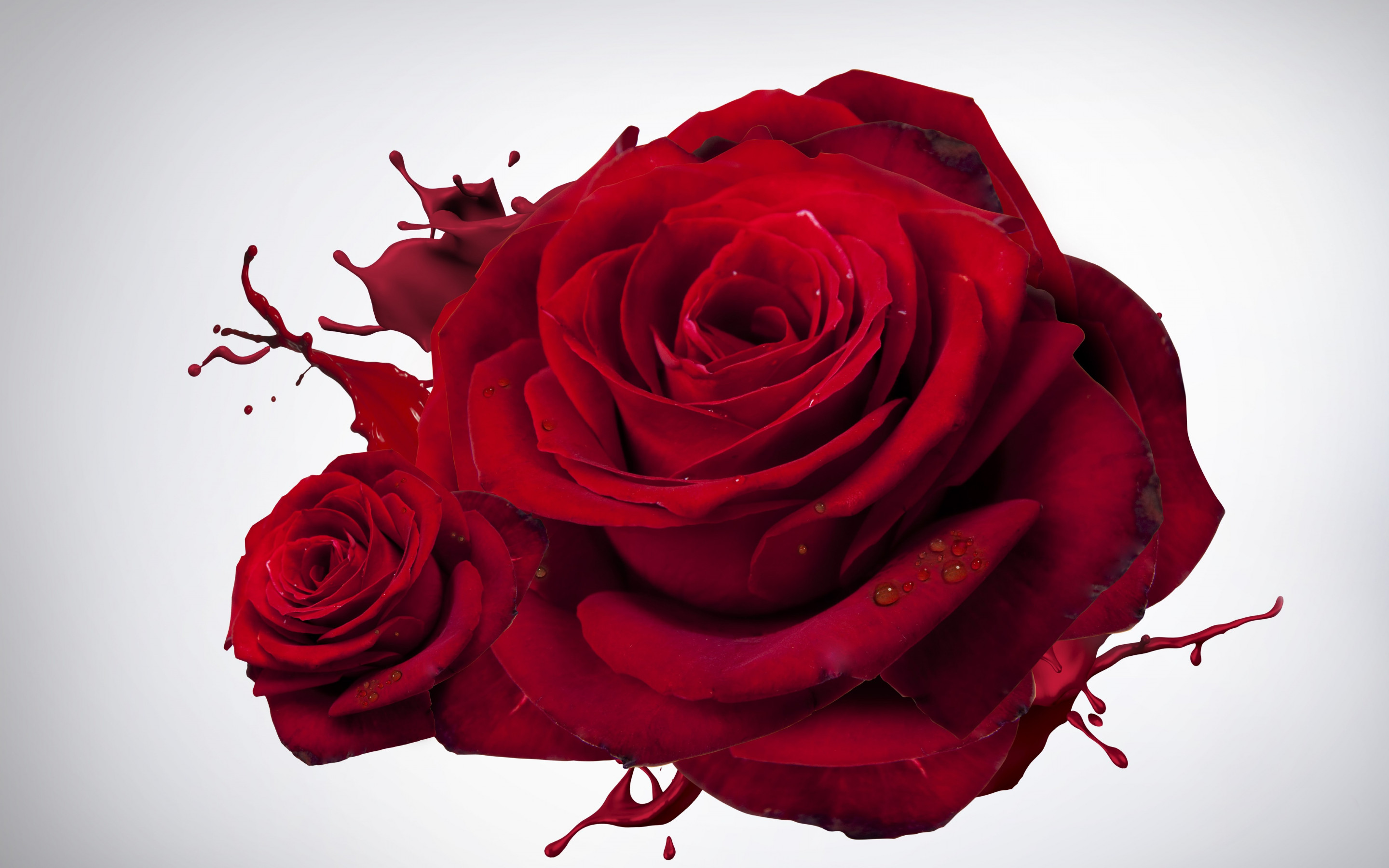 The most beautiful red roses wallpaper 2880x1800