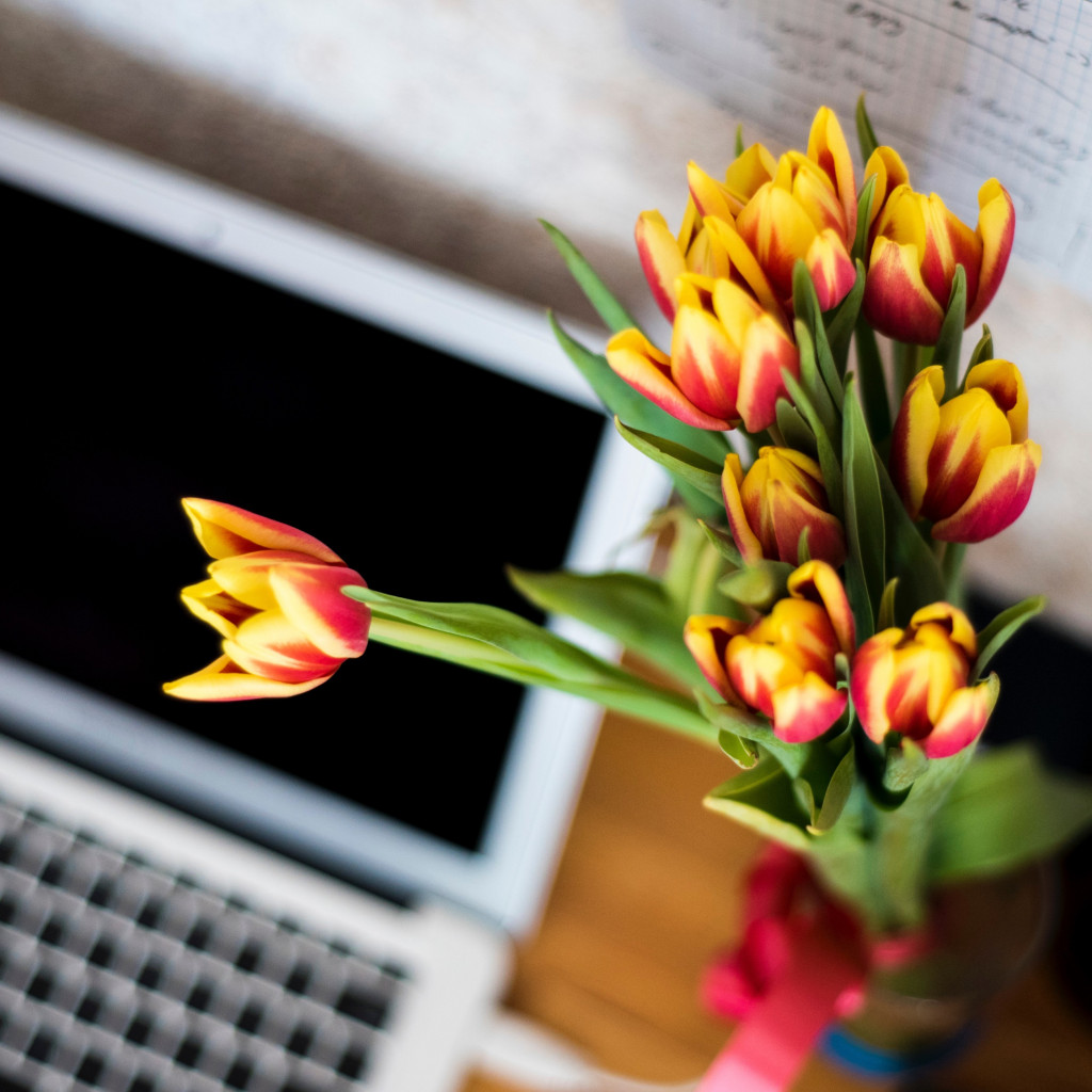 Laptop and tulips bouquet wallpaper 1024x1024