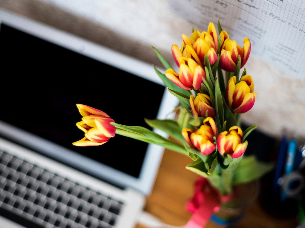 Laptop and tulips bouquet wallpaper 1024x768