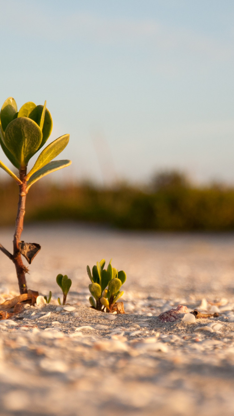 Mangrove on the sandy beach wallpaper 750x1334