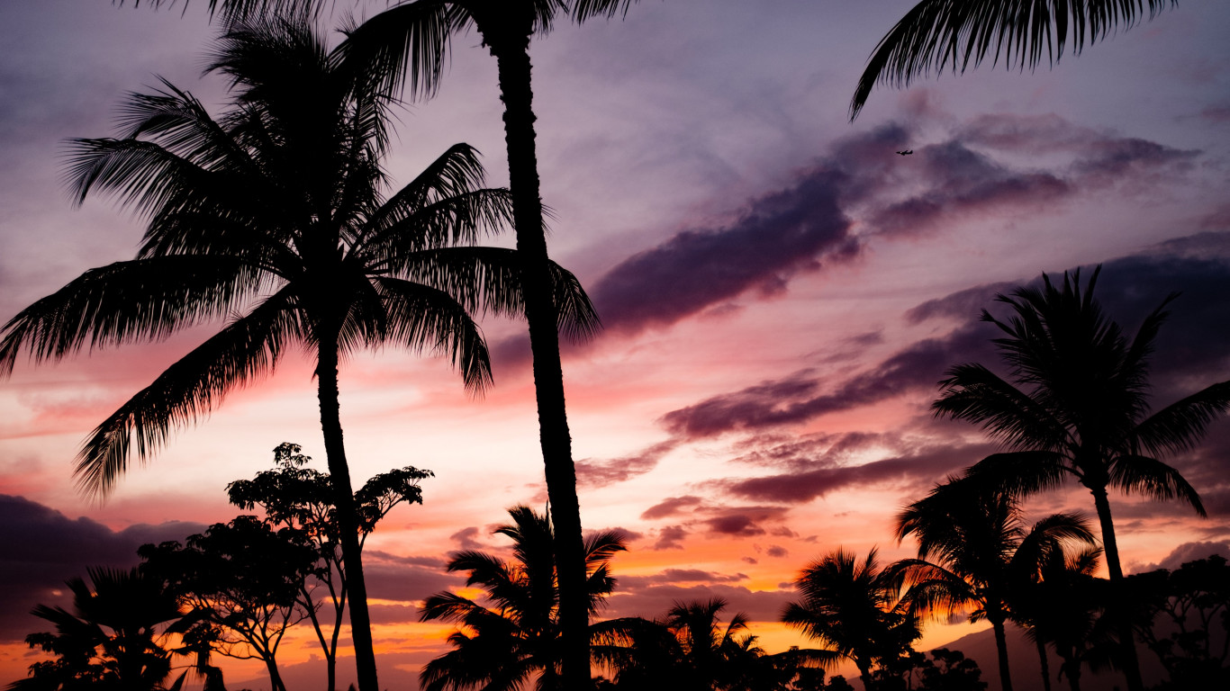 Tropical view with palm trees | 1366x768 wallpaper
