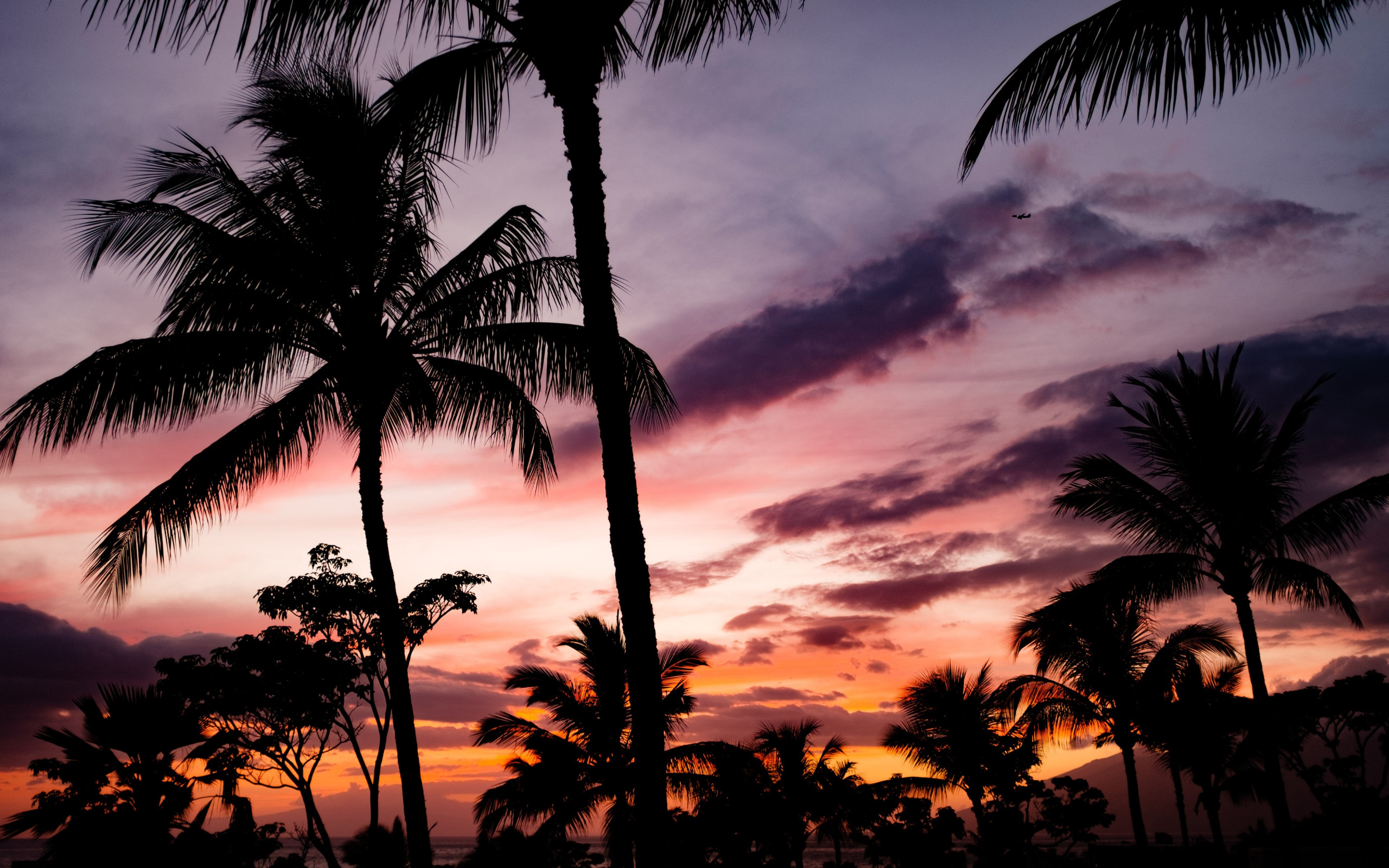 Tropical view with palm trees wallpaper 2560x1600