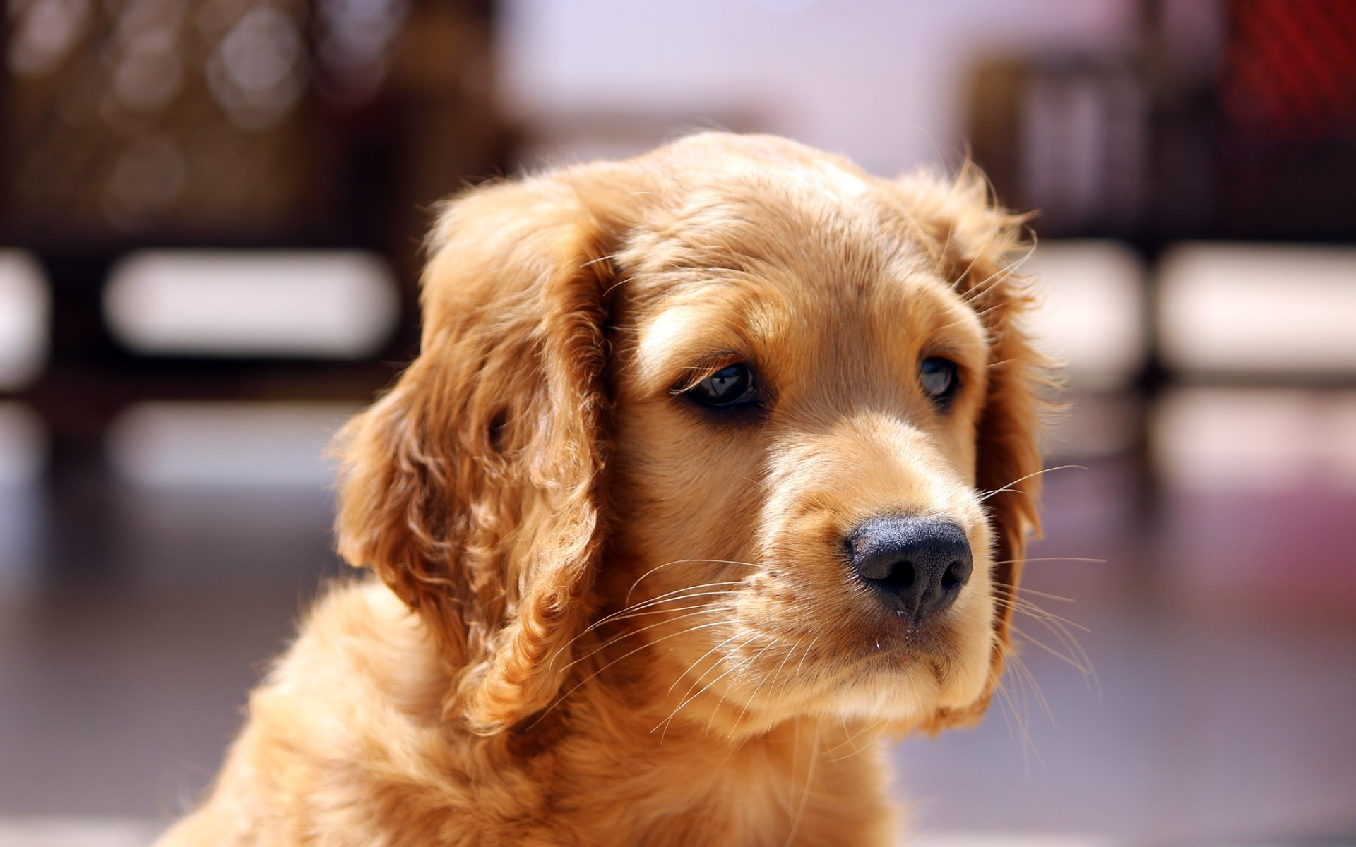 Adorable puppy wallpaper 1920x1200