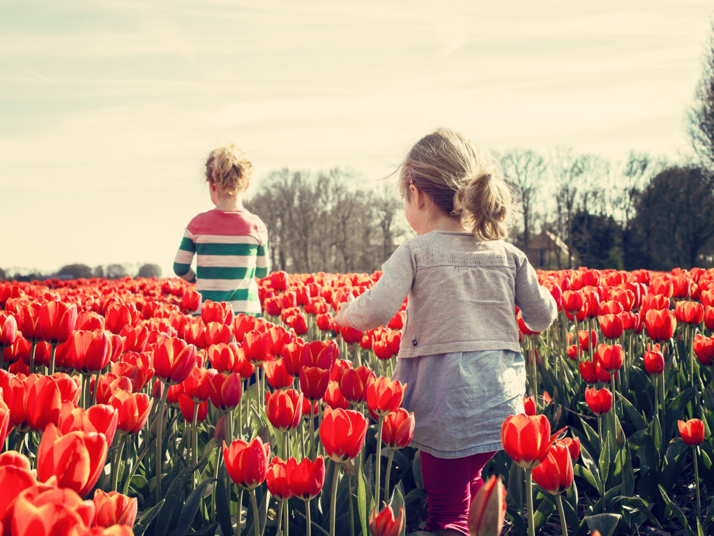 Children in the land with tulips | 1024x768 wallpaper