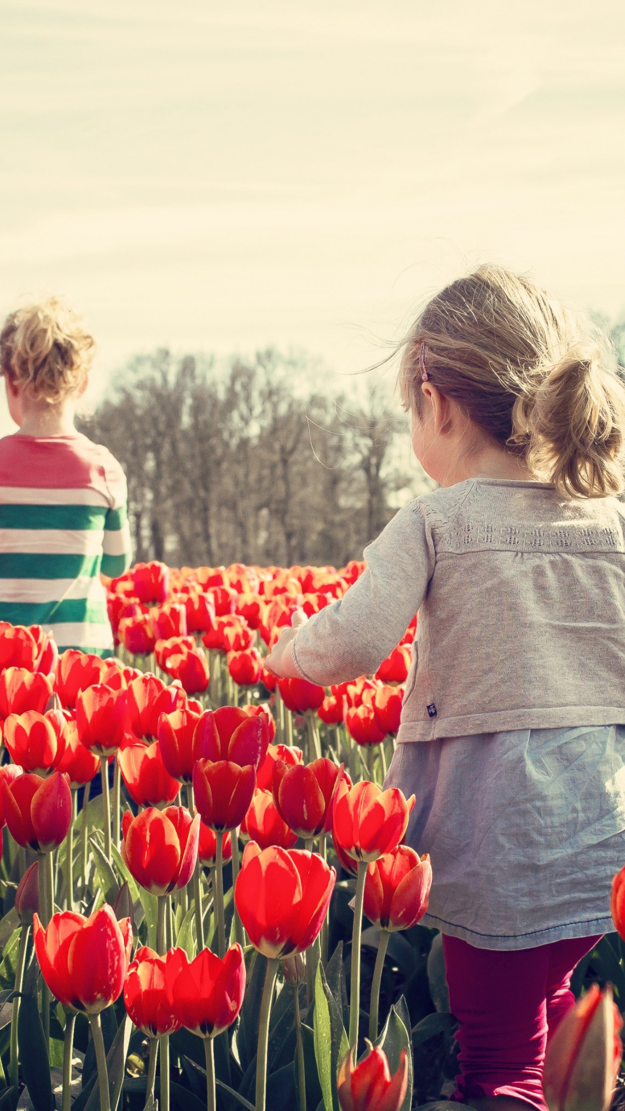 Children in the land with tulips | 1242x2208 wallpaper