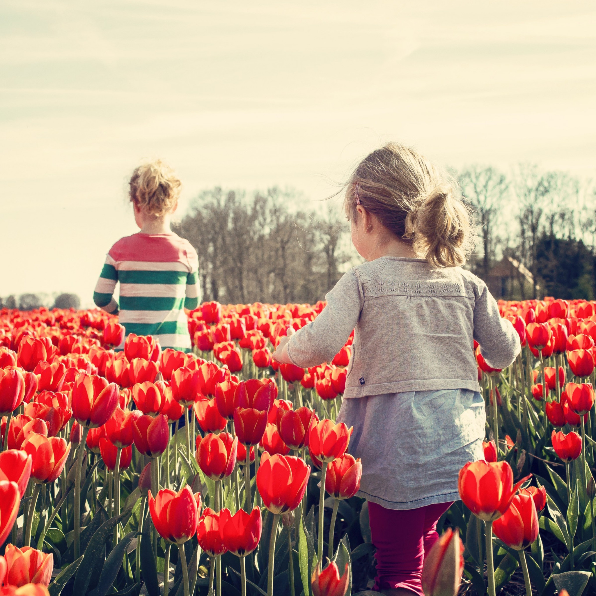 Children in the land with tulips | 2048x2048 wallpaper