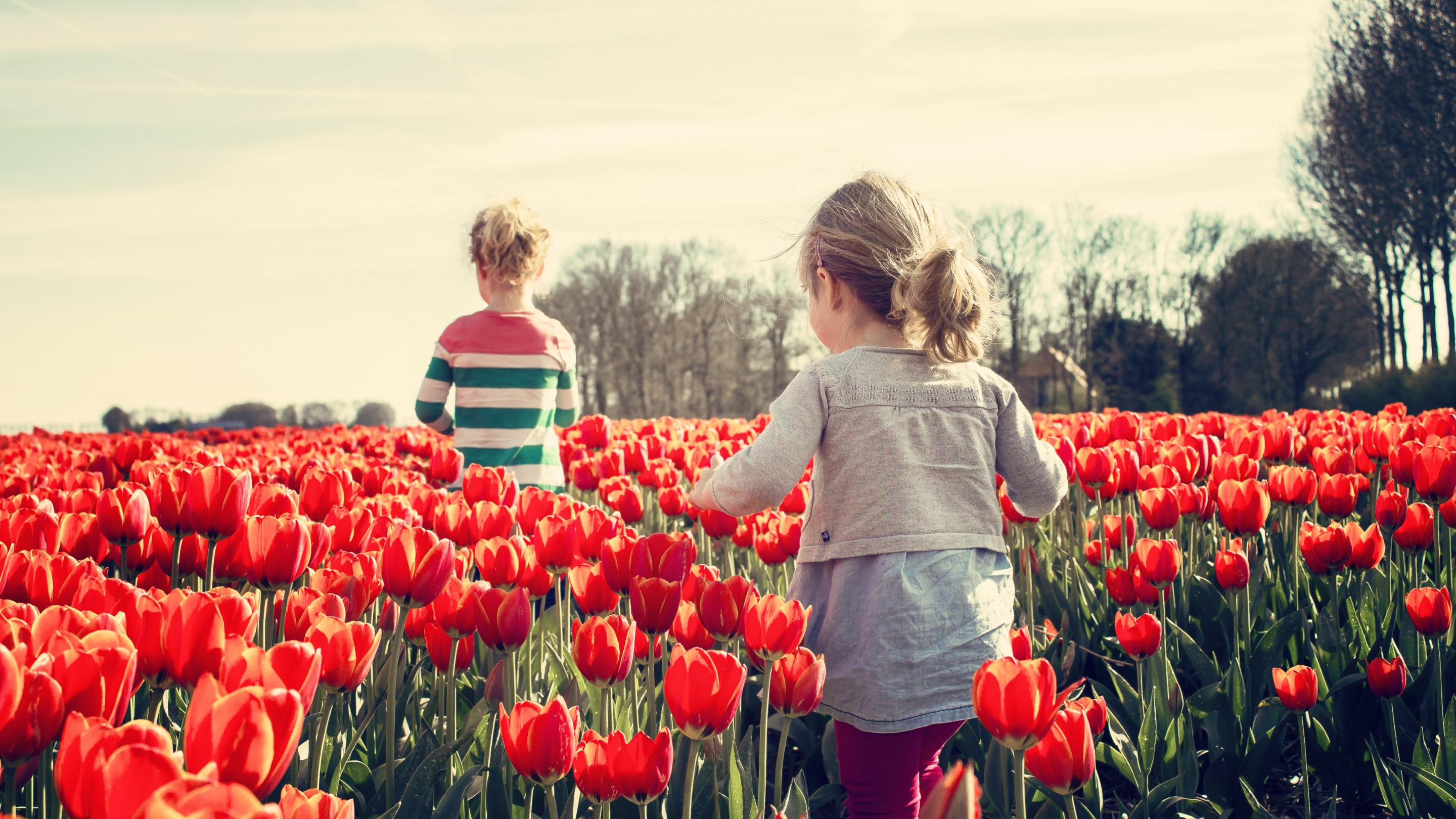 Children in the land with tulips | 2880x1620 wallpaper