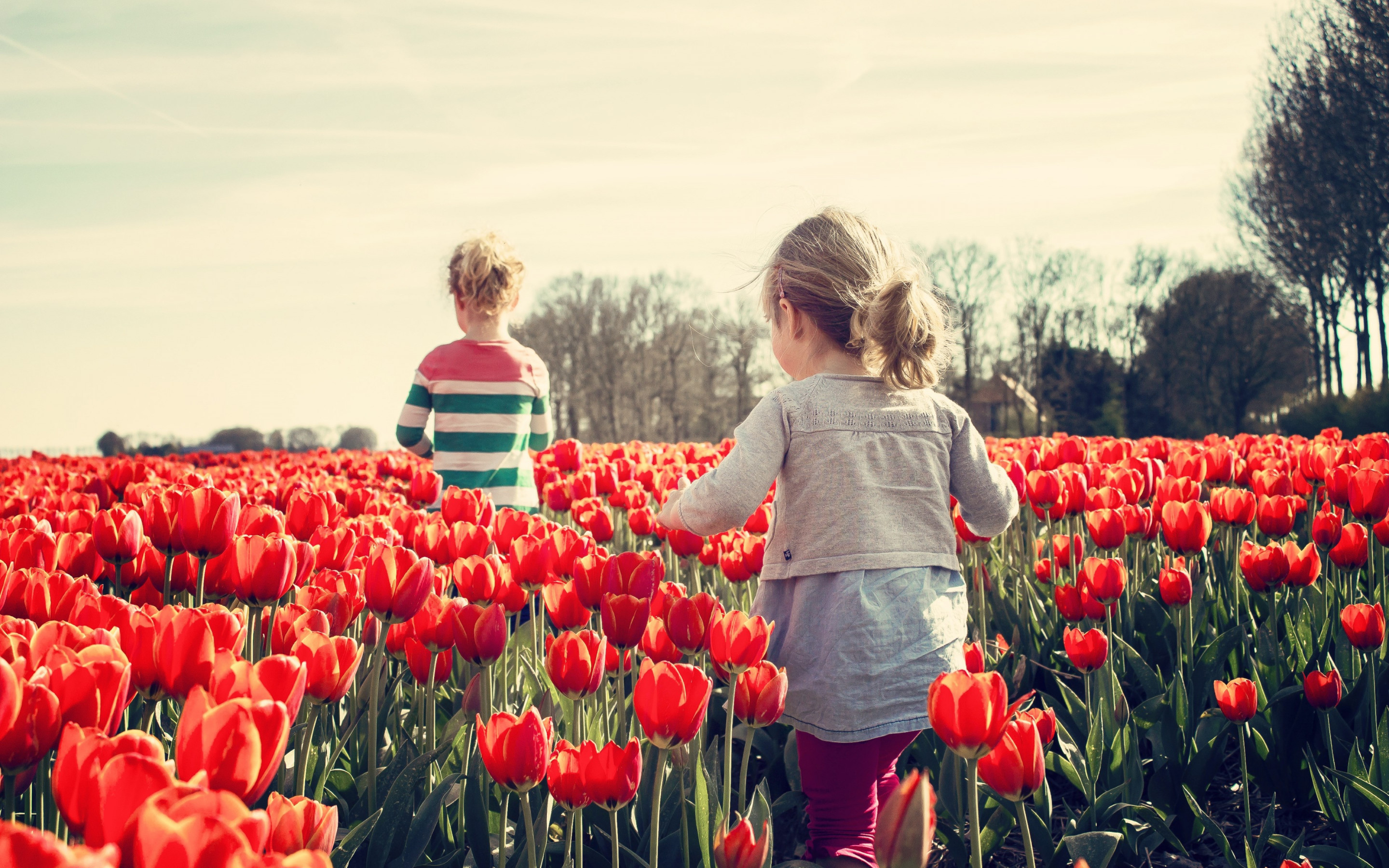 Children in the land with tulips | 2880x1800 wallpaper