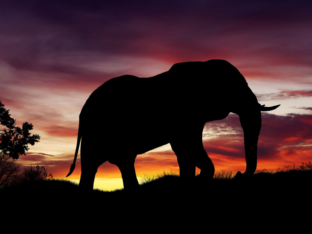 Elephant silhouette | 1024x768 wallpaper