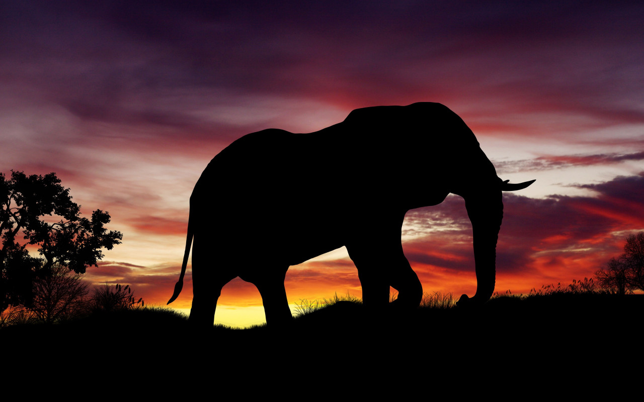 Elephant silhouette | 1280x800 wallpaper