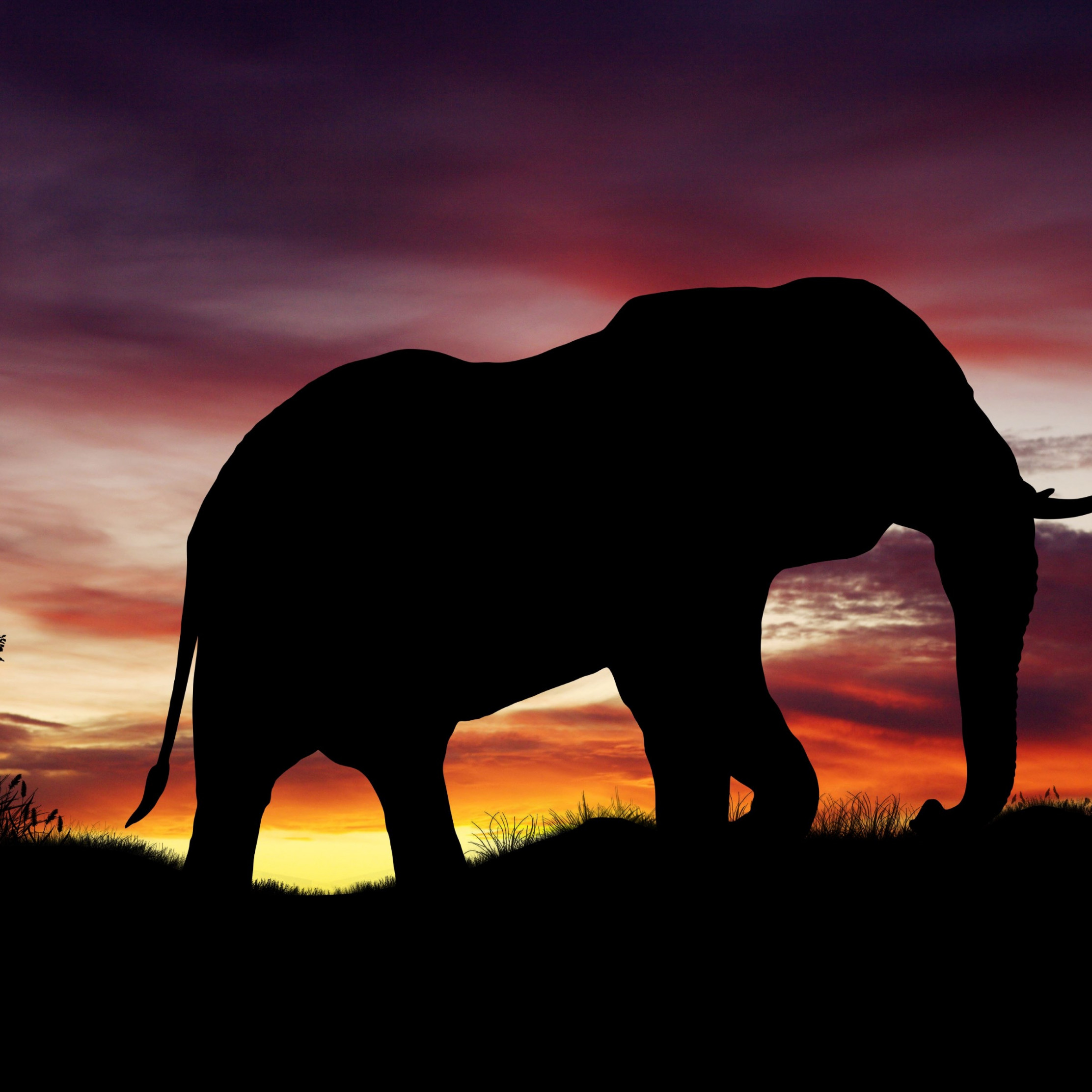 Elephant silhouette wallpaper 2224x2224
