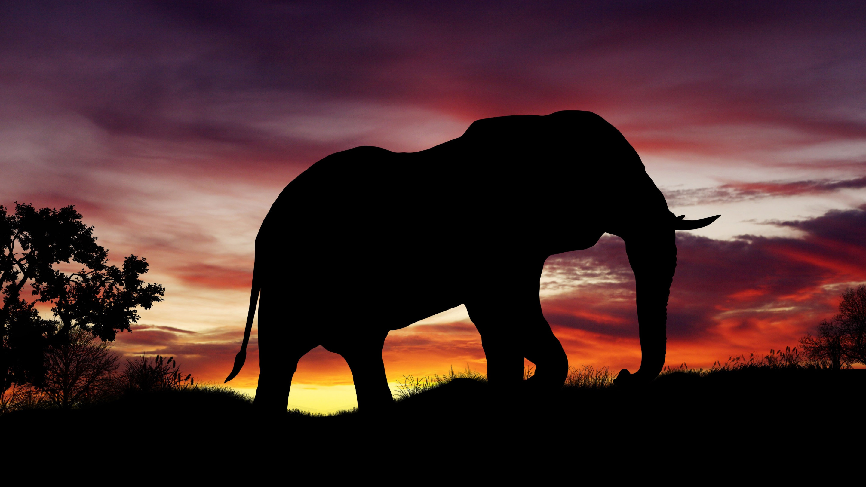 Elephant silhouette | 2880x1620 wallpaper