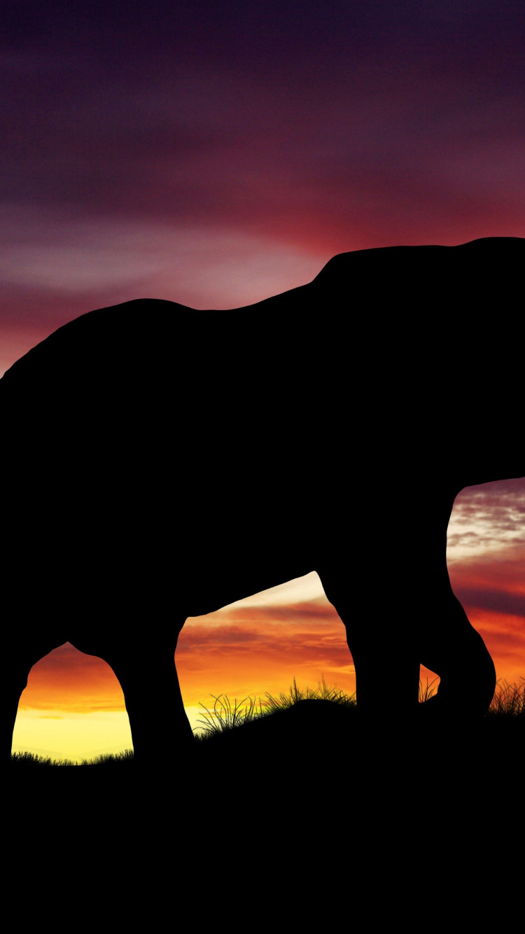 Elephant silhouette | 750x1334 wallpaper