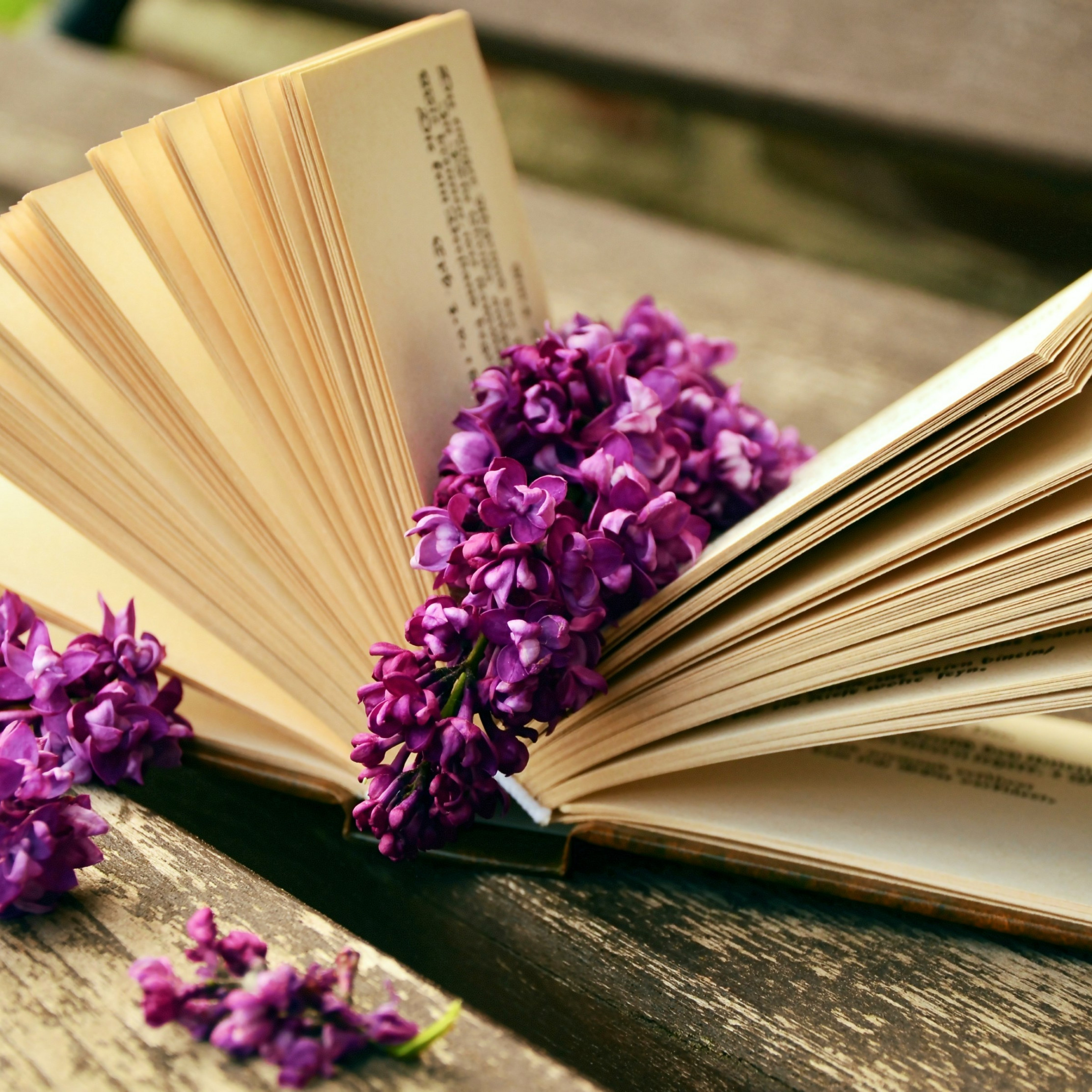 Lilac flowers and a good book wallpaper 2224x2224