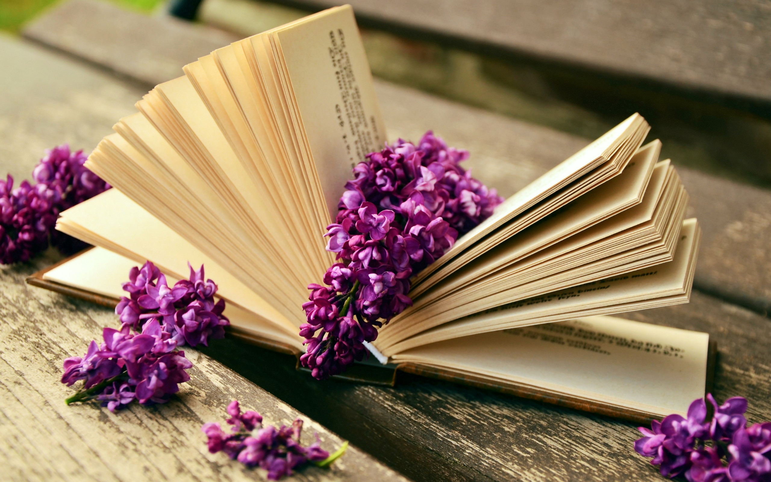 Lilac flowers and a good book wallpaper 2560x1600