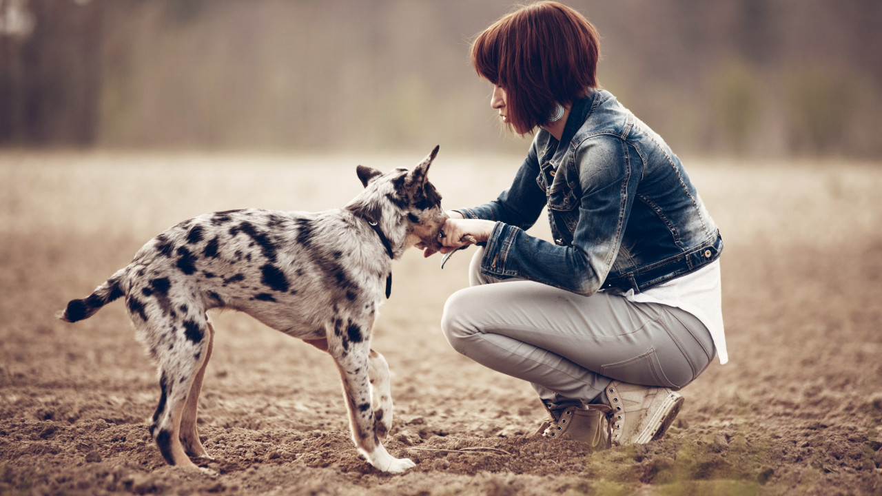 The girl and the puppy wallpaper 1280x720