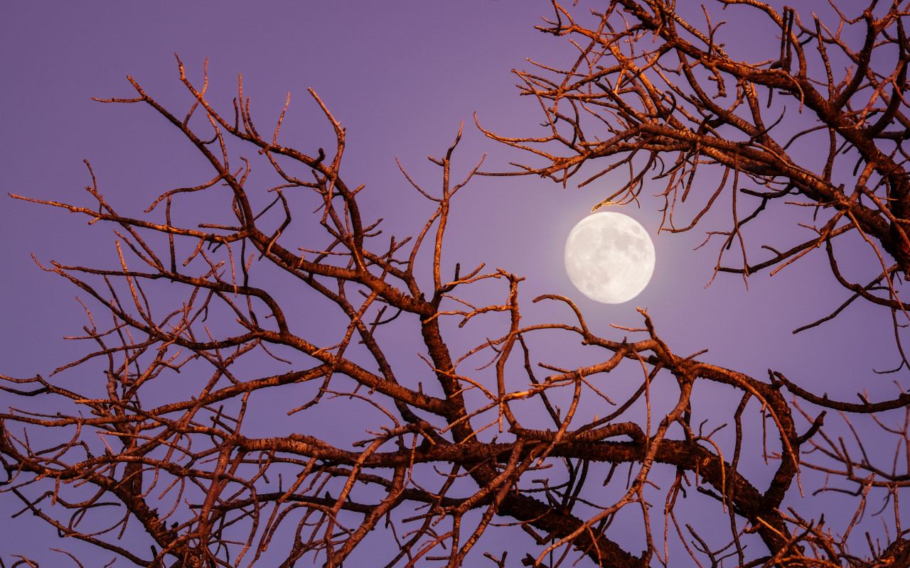 Twilight moon wallpaper 1280x800