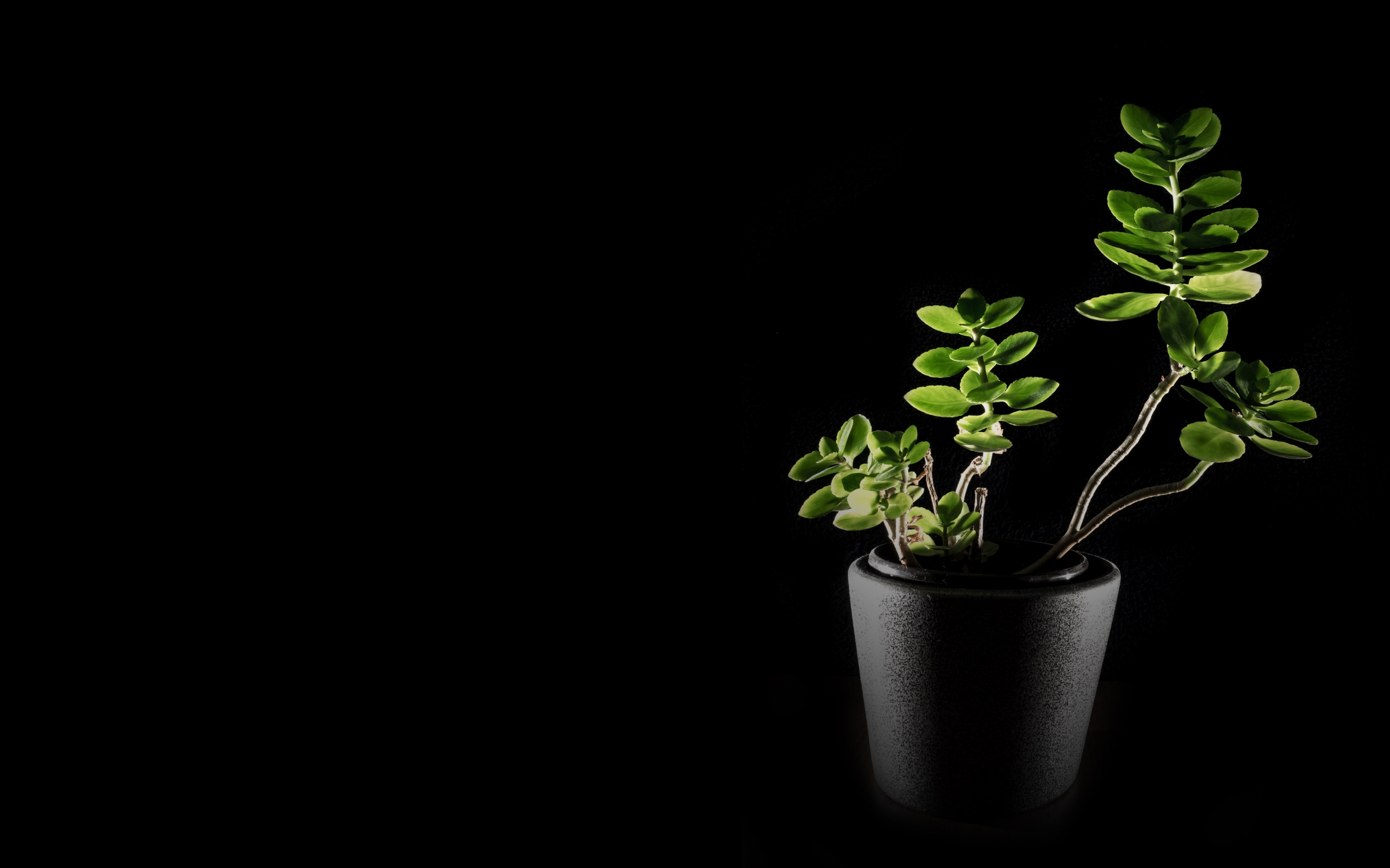 Natural green in darkness | 2880x1800 wallpaper
