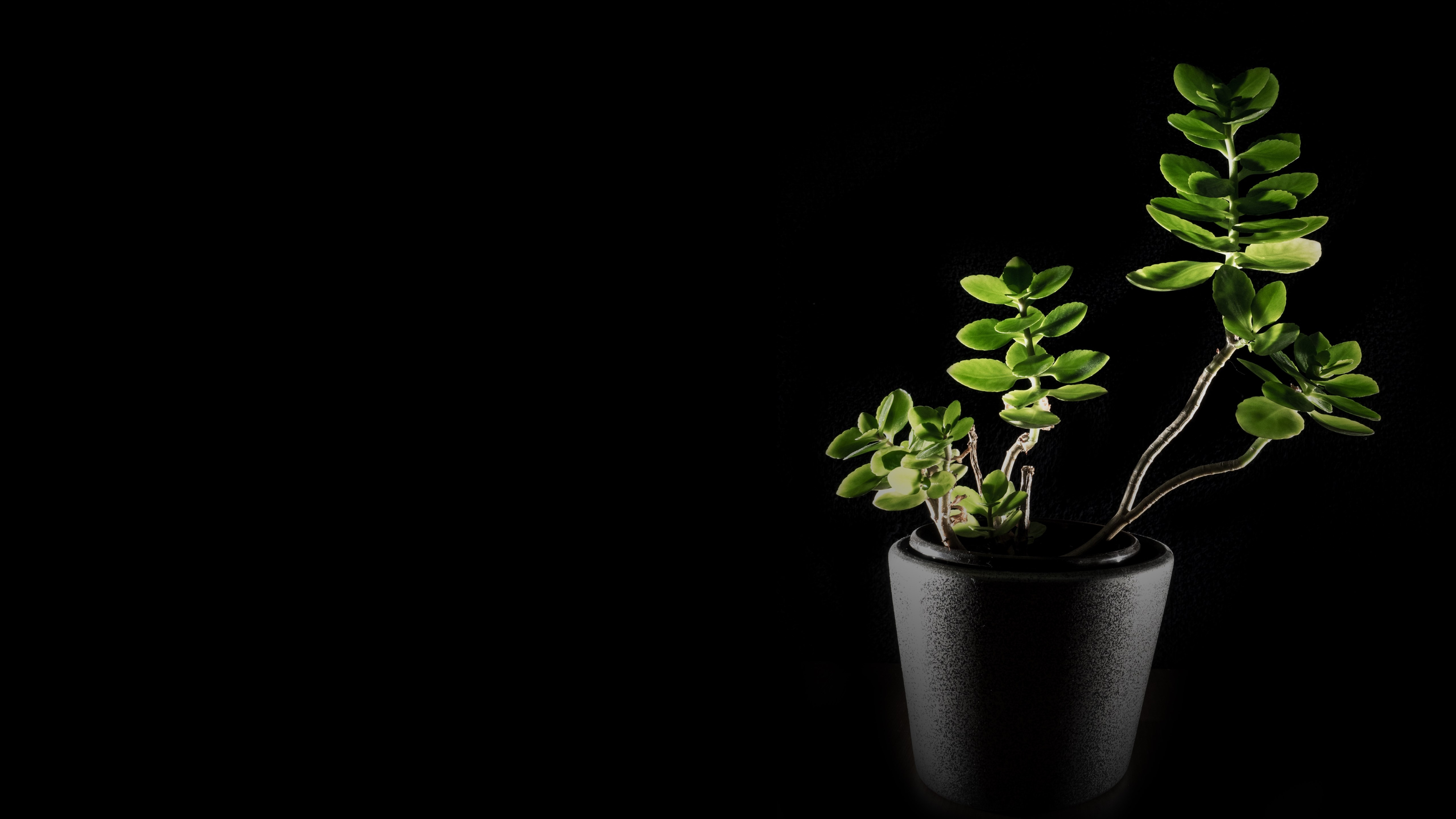 Natural green in darkness wallpaper 5120x2880