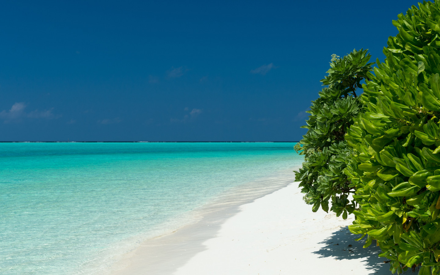 Turquoise waters of Maldives wallpaper 1440x900
