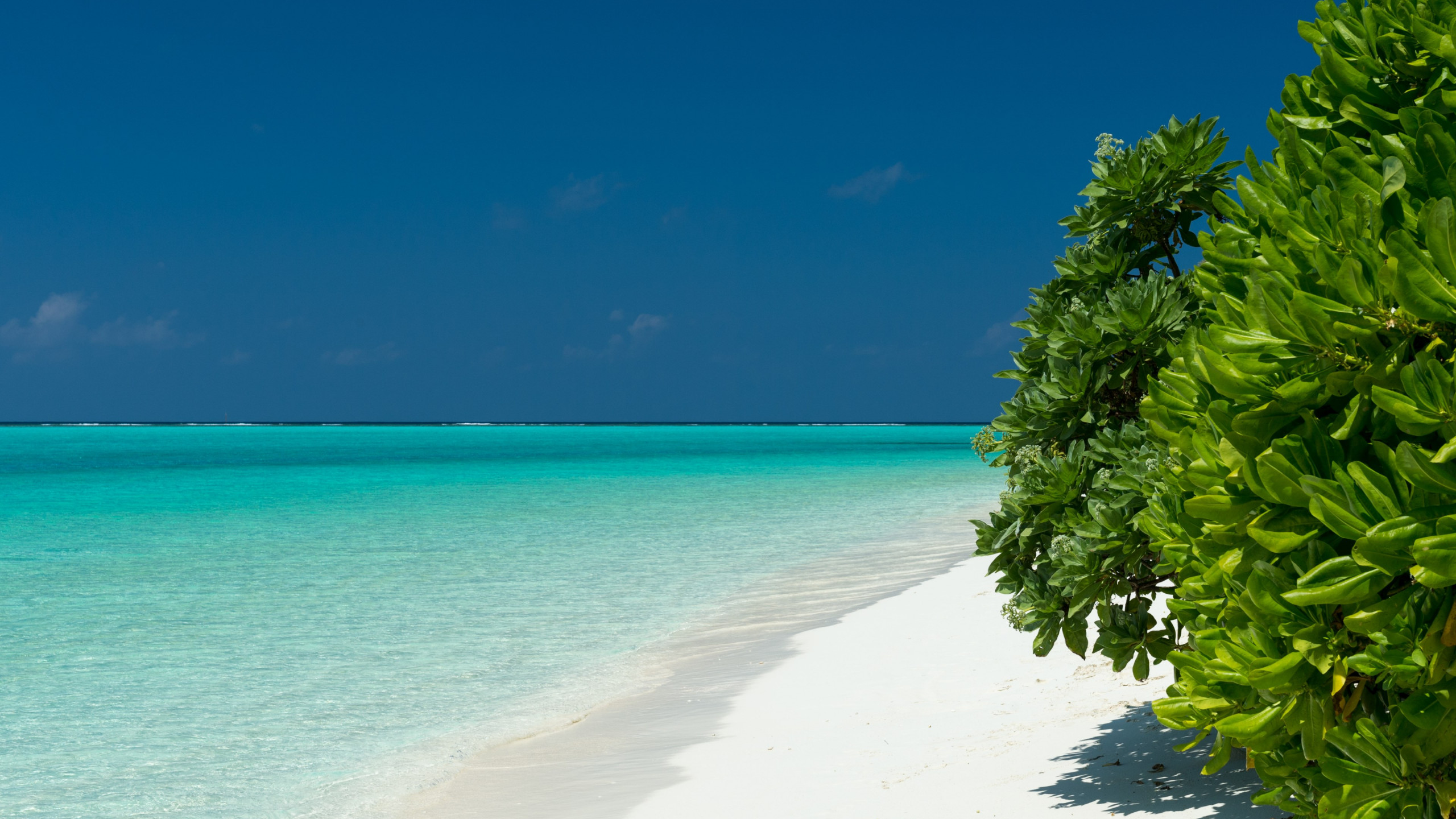 Turquoise waters of Maldives wallpaper 2560x1440