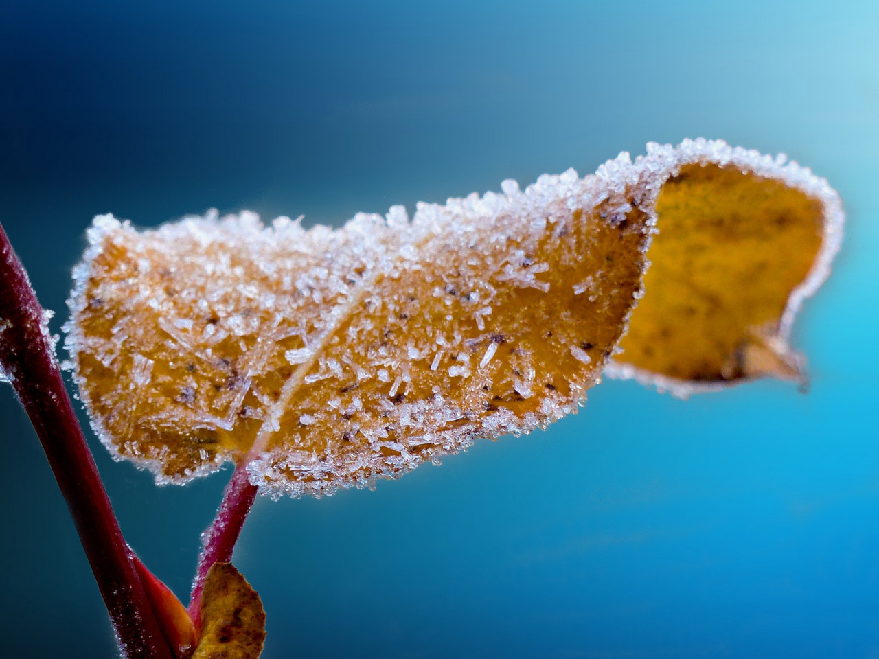Frosted leaf | 1280x960 wallpaper