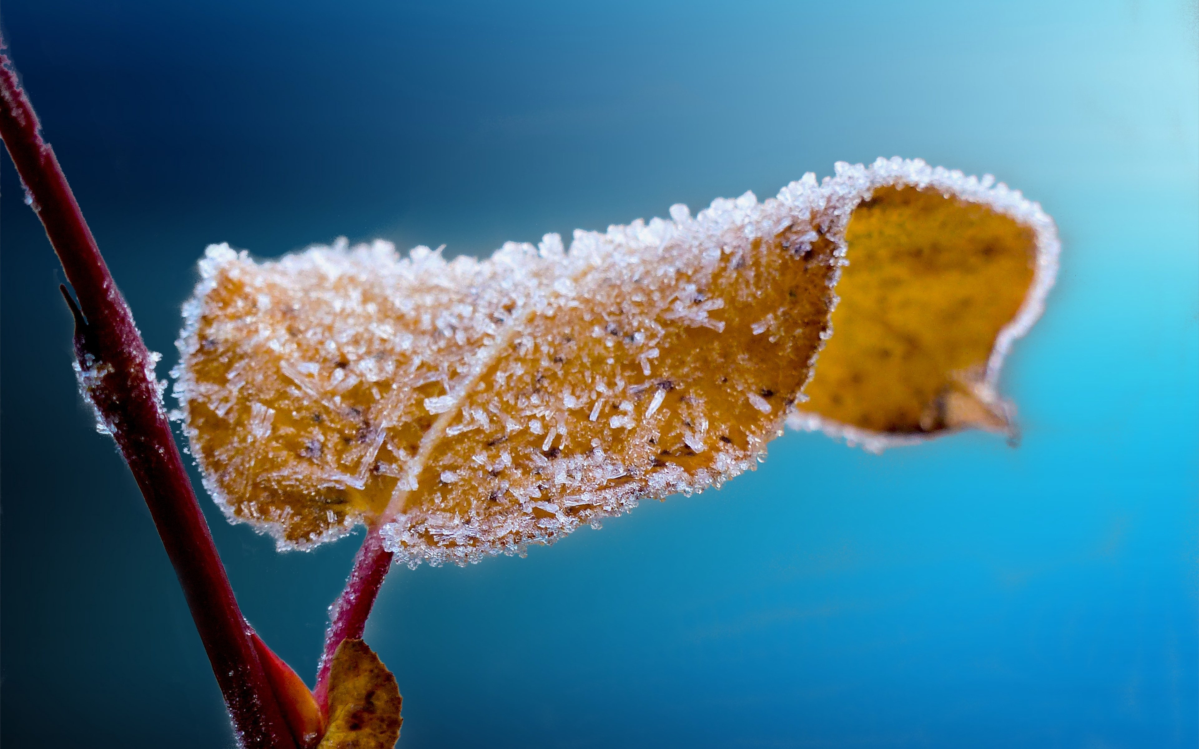 Frosted leaf | 3840x2400 wallpaper