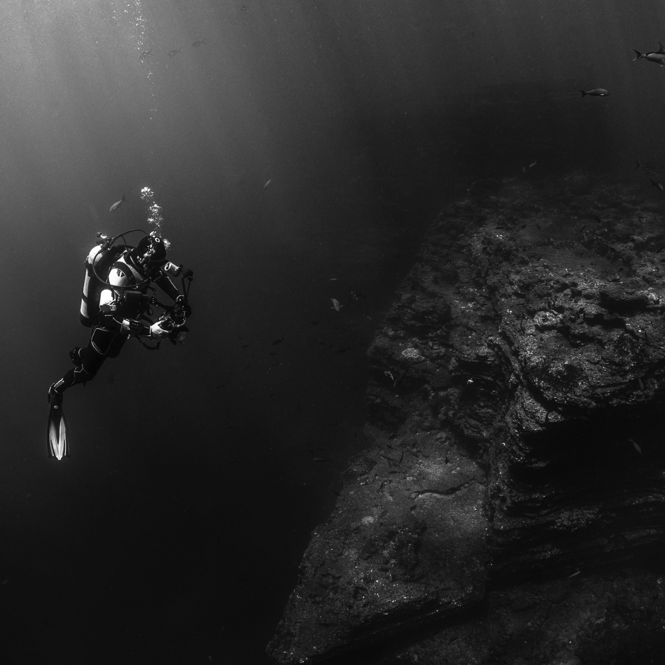Diver in the Pacific Ocean wallpaper 2224x2224