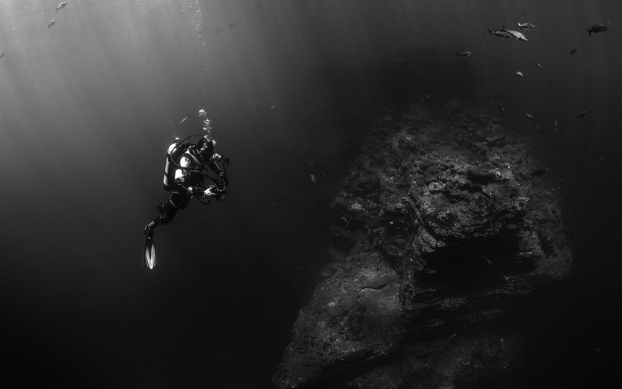 Diver in the Pacific Ocean wallpaper 2560x1600