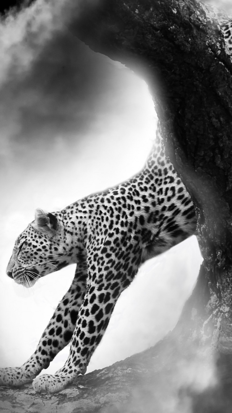 Leopard under the Moon | 750x1334 wallpaper