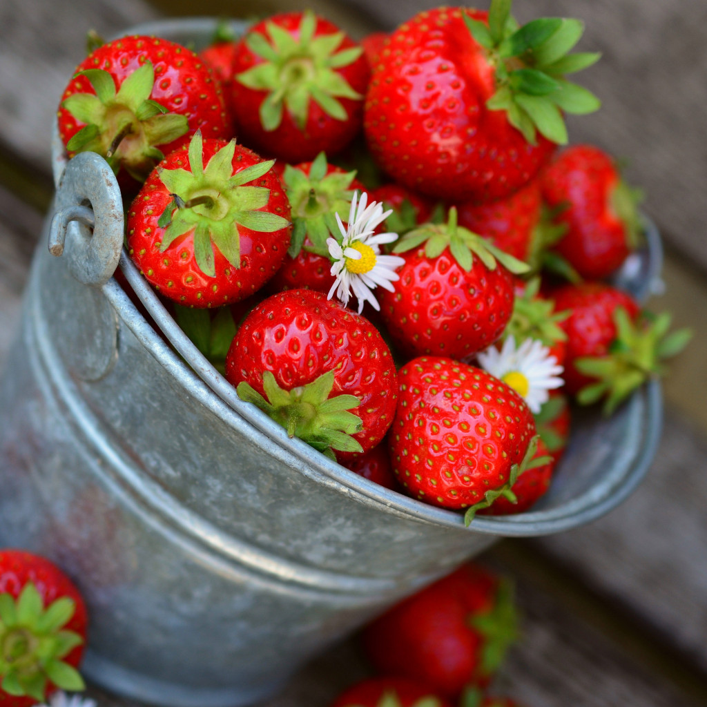 Bucket with strawberries wallpaper 1024x1024