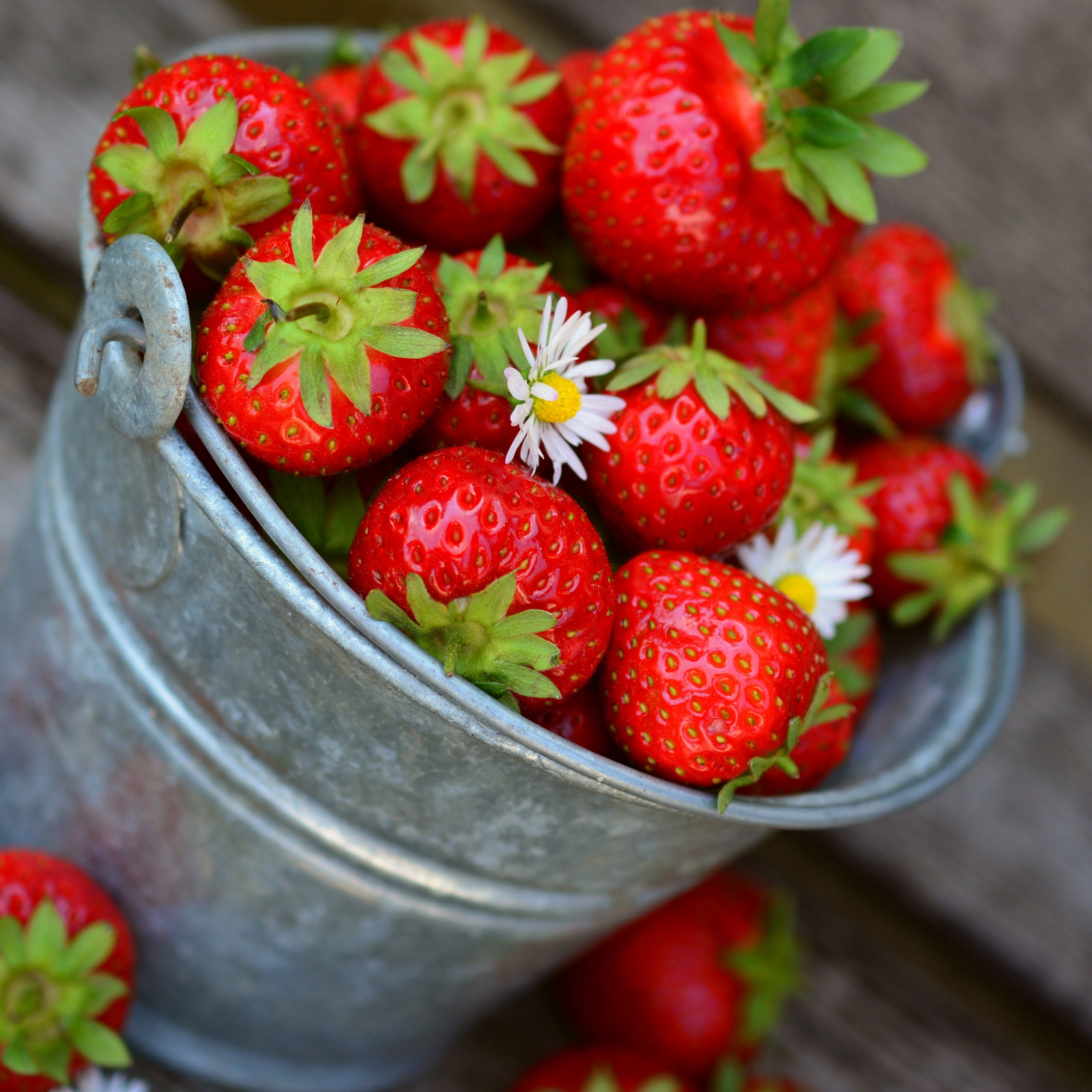 Bucket with strawberries wallpaper 2224x2224