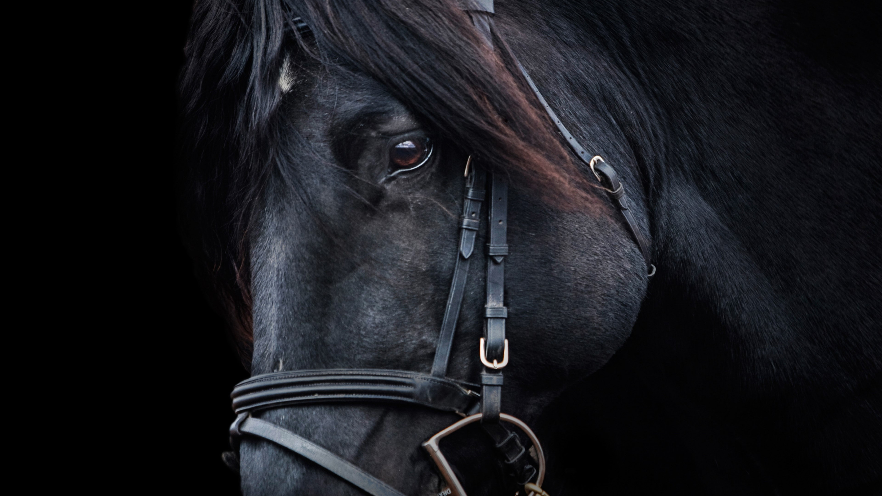 Black horse wallpaper 2880x1620