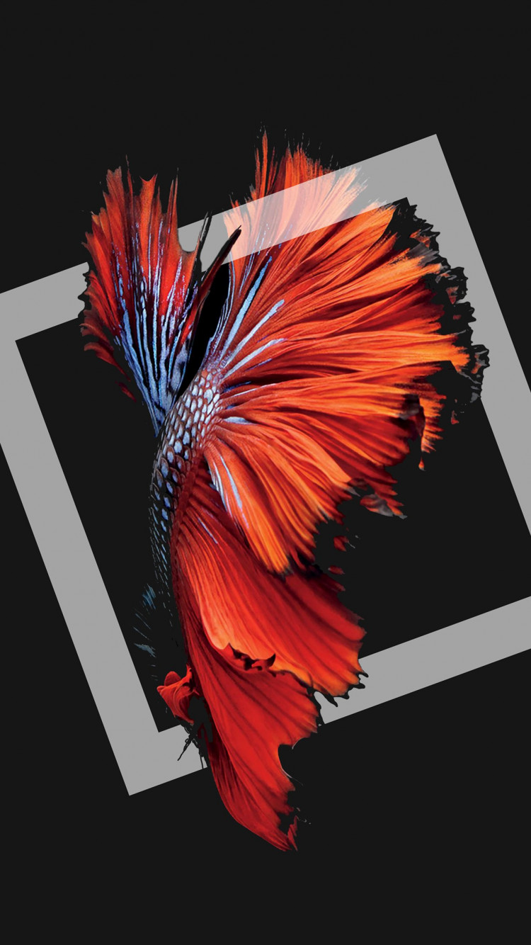 Fish in darkness wallpaper 750x1334