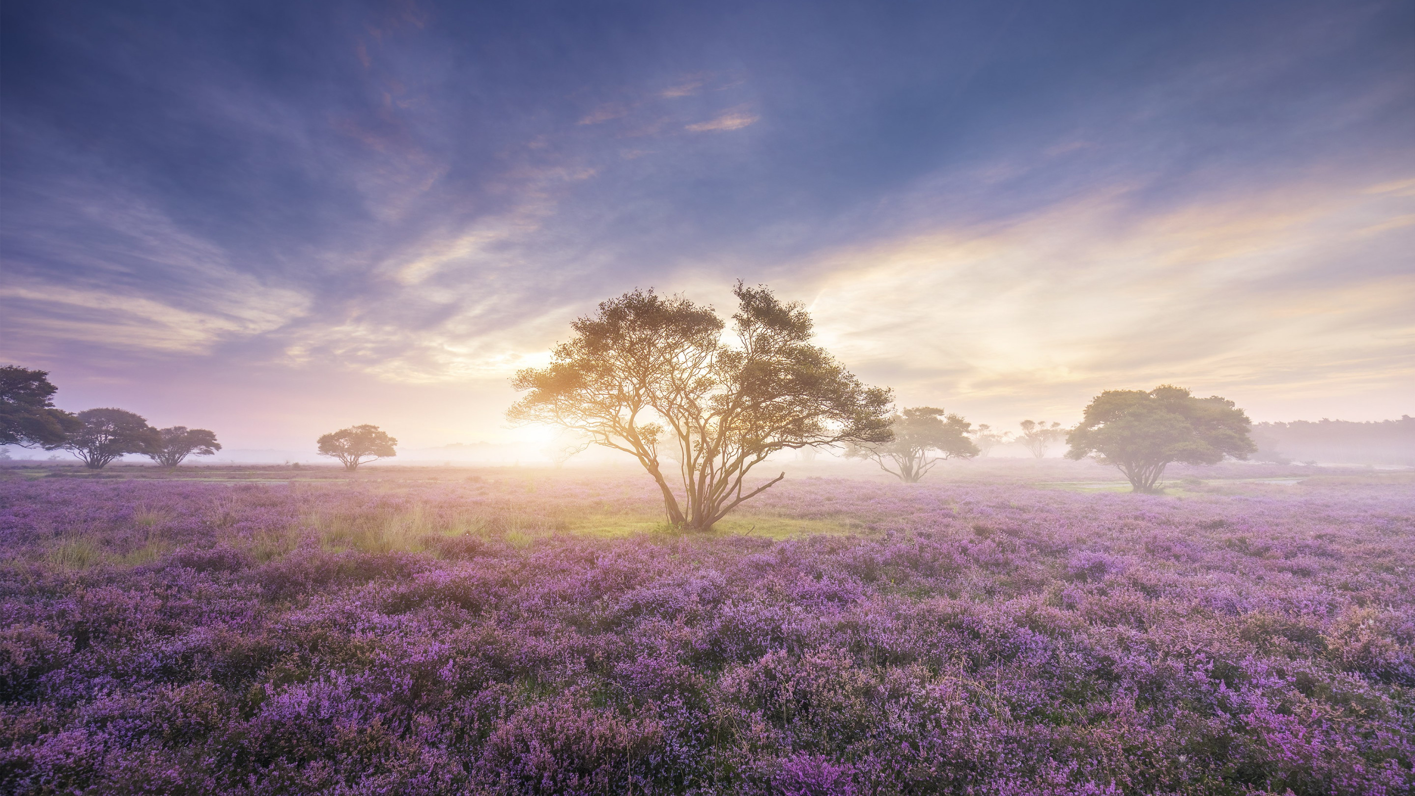 Bloom on the fields of Zuiderheide wallpaper 2880x1620
