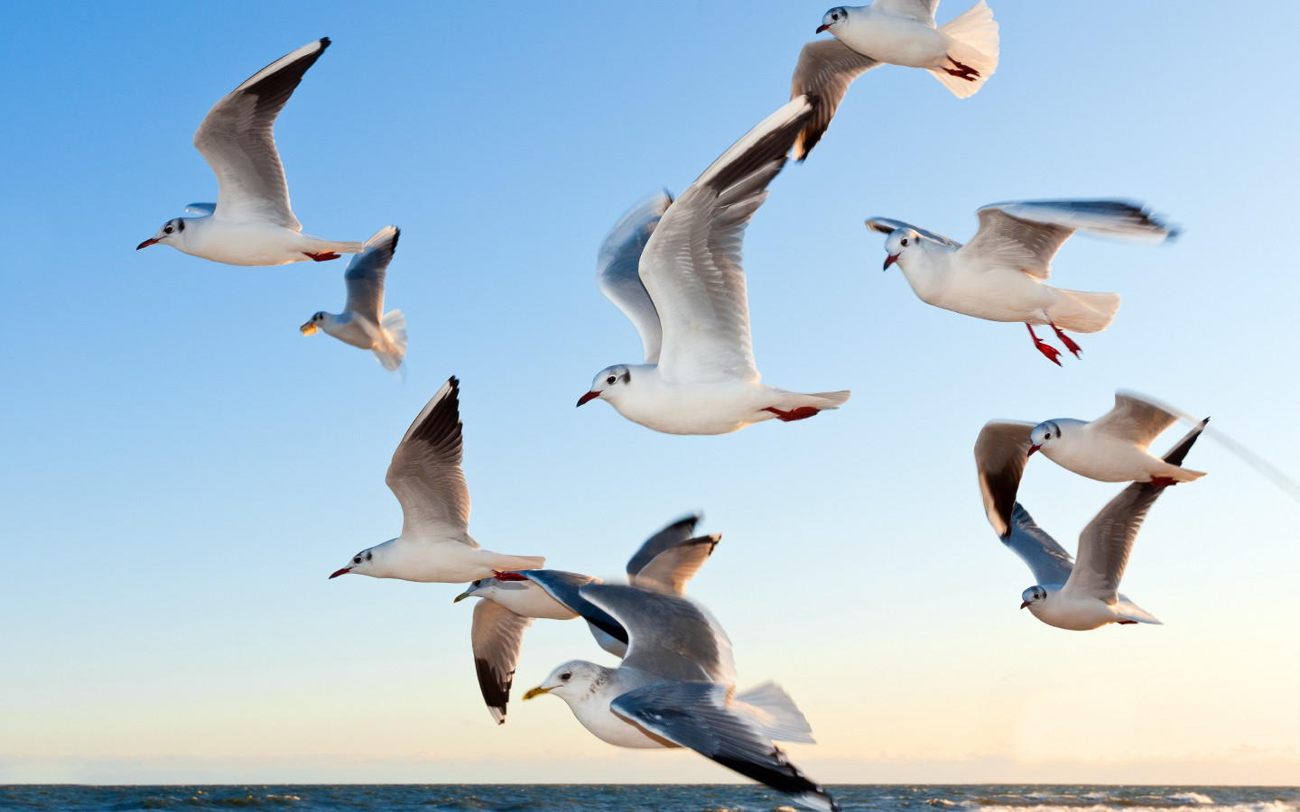 Seagulls wallpaper 1440x900
