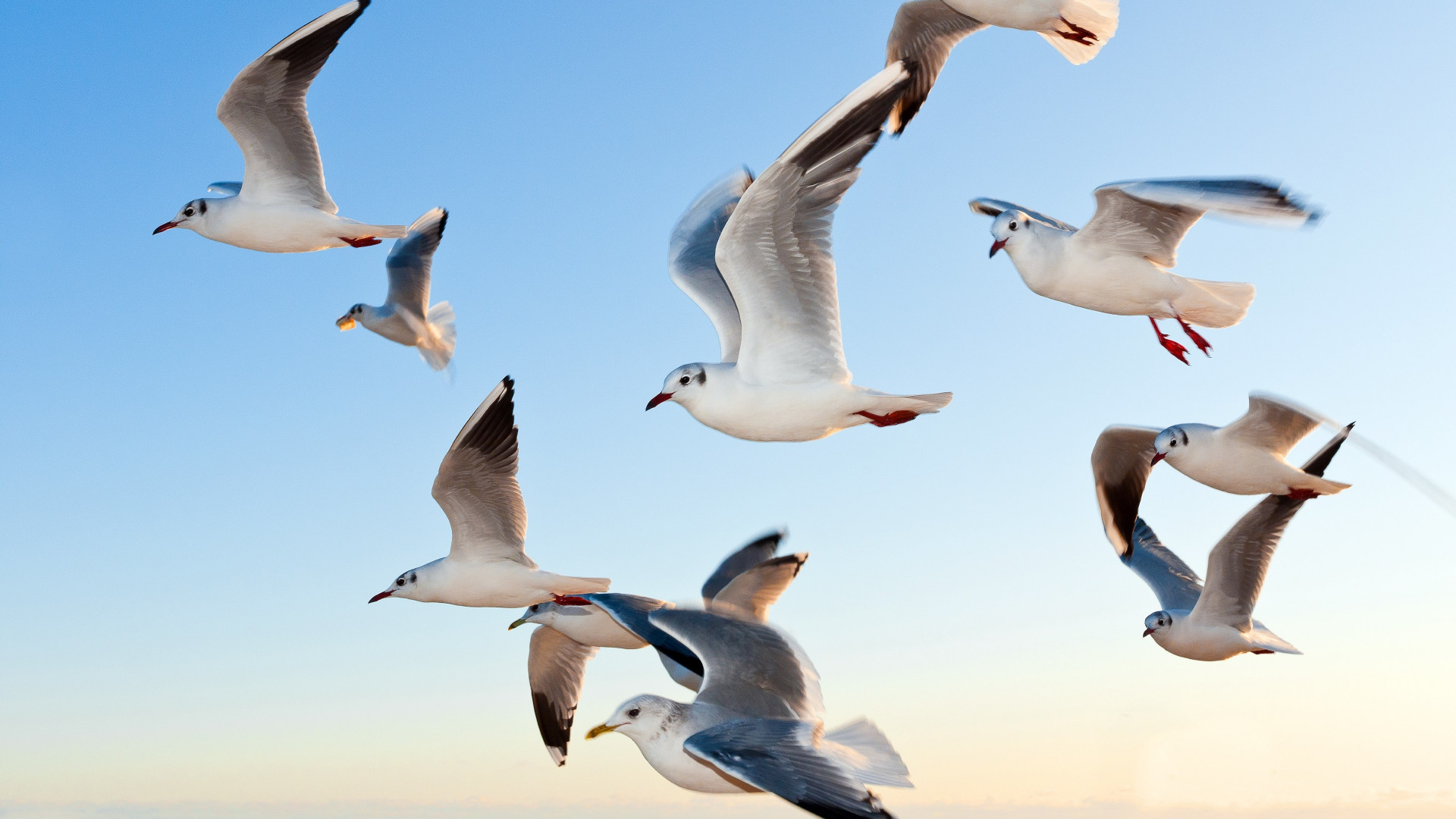 Seagulls | 1920x1080 wallpaper