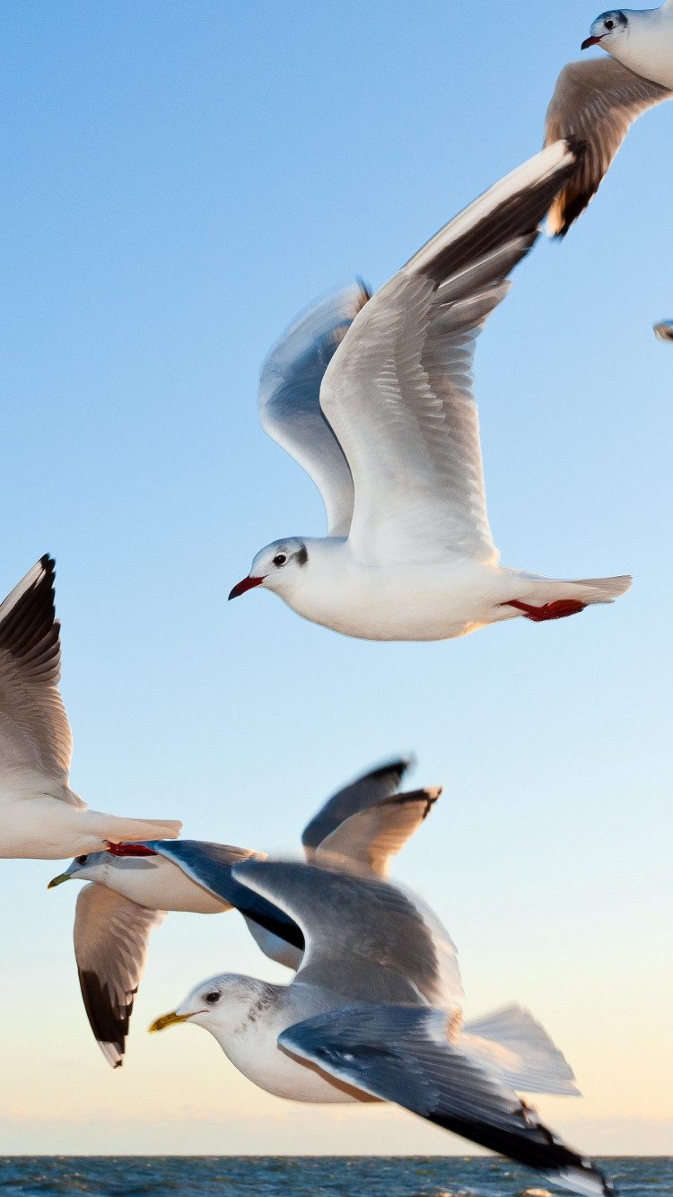 Seagulls wallpaper 750x1334
