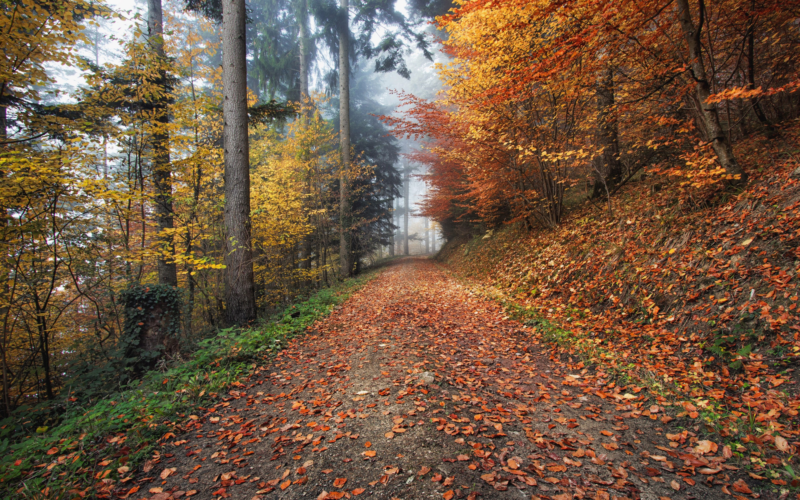 How nature looks Autumn in Kirchzarten, Germany wallpaper 2560x1600