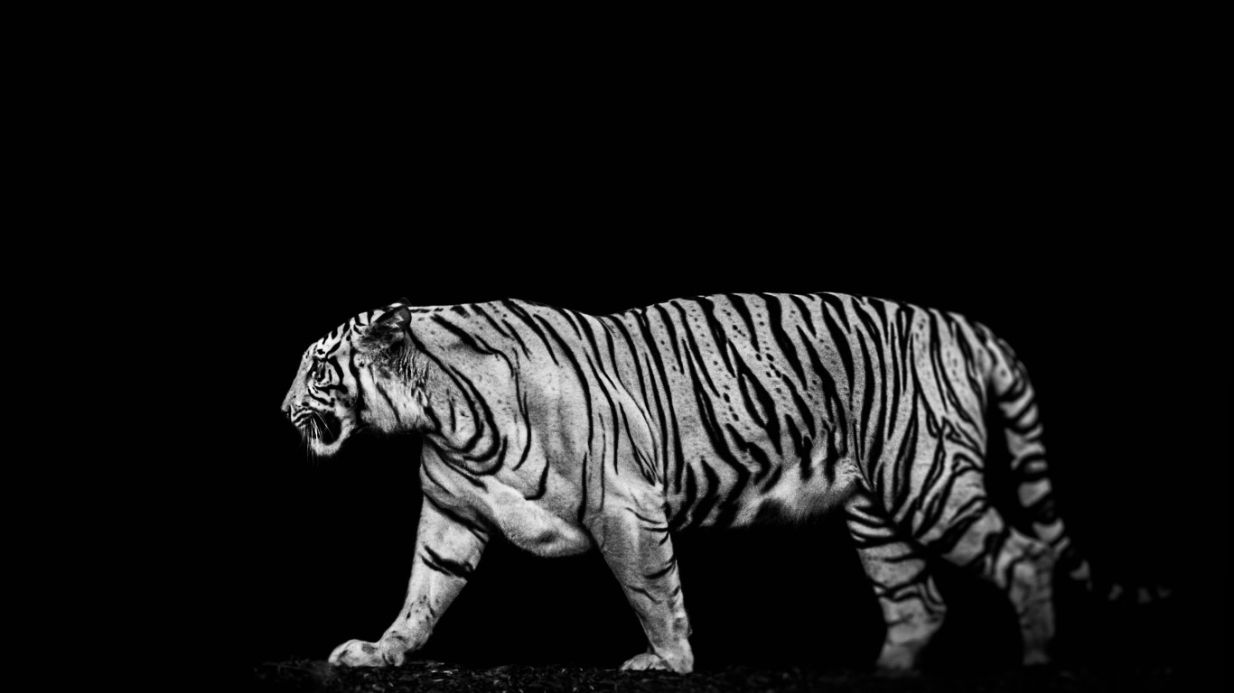 Tiger in the darkness wallpaper 1366x768