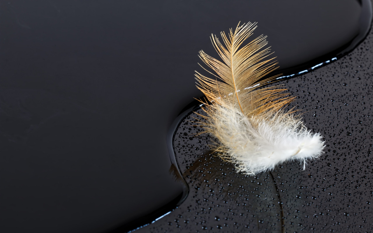 Dark surface with a feather on water wallpaper 1280x800